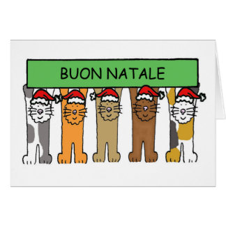 Italian Christmas with cats in Santa hats. Card