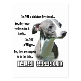 Italian Greyhound FAQ Postcard