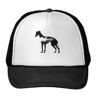 Italian Greyhound Flame Cap