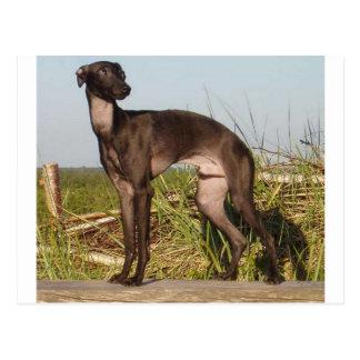 italian greyhound full.png postcard