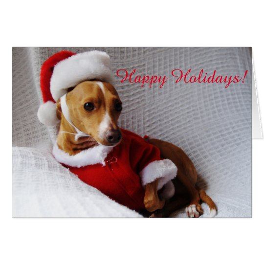Italian Greyhound Holiday Greeting Card
