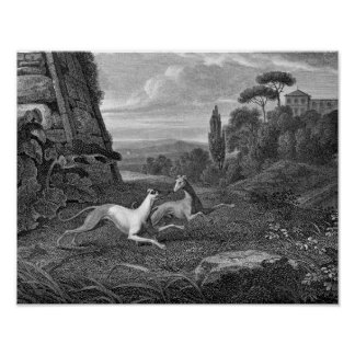 Italian Greyhounds Dog Drawing Posters