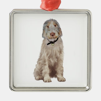 Italian Spinone (A) - Wheaten Christmas Ornament