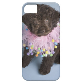 Italian Water Dog (Lagotto) Puppy iPhone 5 Cover