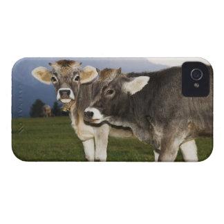 Italy, Alto Adige Case-Mate iPhone 4 Case