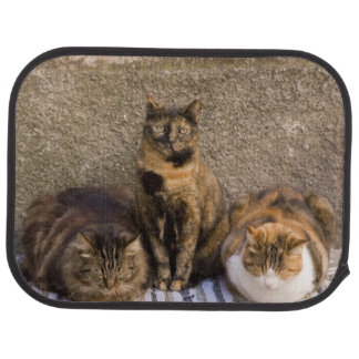 Italy, Cinque Terre, Vernazza. Three cats beside Car Mat