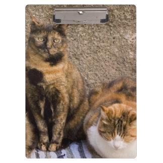 Italy, Cinque Terre, Vernazza. Three cats beside Clipboard