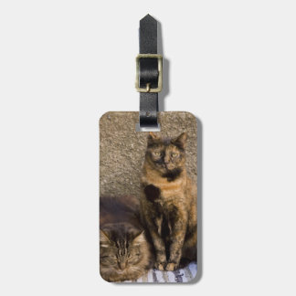 Italy, Cinque Terre, Vernazza. Three cats beside Luggage Tag
