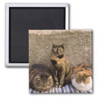 Italy, Cinque Terre, Vernazza. Three cats beside Magnet