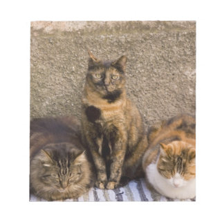 Italy, Cinque Terre, Vernazza. Three cats beside Notepad