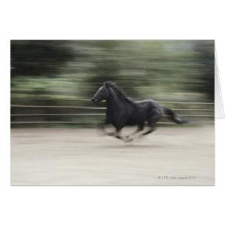 Italy, Latium, Maremma horse galloping (blurred Card
