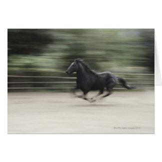 Italy, Latium, Maremma horse galloping (blurred Greeting Card