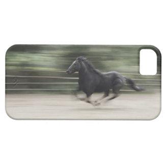 Italy, Latium, Maremma horse galloping (blurred iPhone 5 Case