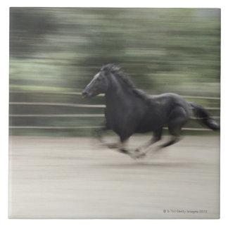 Italy, Latium, Maremma horse galloping (blurred Tile