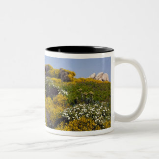 Italy, Sardinia, Santa Teresa Gallura. Capo 3 Two-Tone Coffee Mug
