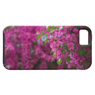 Italy, Sicily, Cefalu, Flowered Courtyard by iPhone 5 Covers