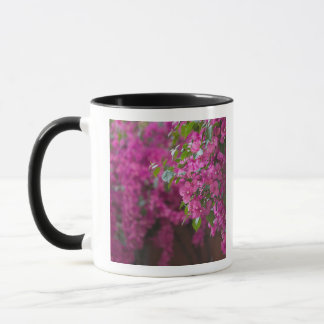 Italy, Sicily, Cefalu, Flowered Courtyard by Mug