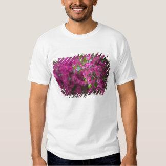 Italy, Sicily, Cefalu, Flowered Courtyard by Tshirt