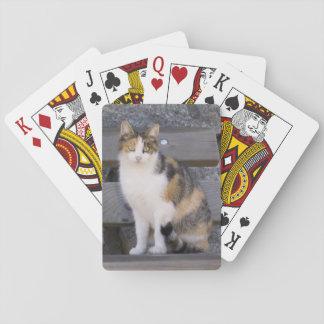 Italy, Trentino - Alto Adige, Bolzano province, 3 Poker Deck