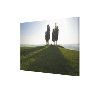 Italy, Tuscany, Cypress Trees in Tuscany with Canvas Print
