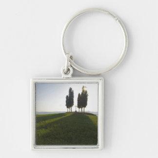 Italy, Tuscany, Cypress Trees in Tuscany with Key Ring
