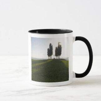 Italy, Tuscany, Cypress Trees in Tuscany with Mug