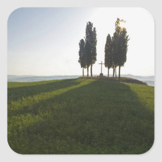Italy, Tuscany, Cypress Trees in Tuscany with Square Sticker