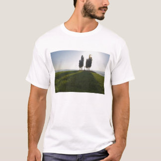 Italy, Tuscany, Cypress Trees in Tuscany with T-Shirt