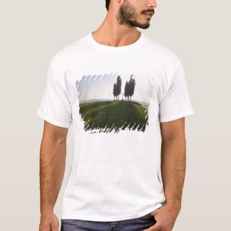 Italy, Tuscany, Cypress Trees in Tuscany with T-Shirt