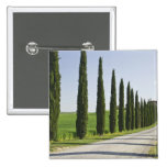 Italy, Tuscany. Cypress trees line driveway to 15 Cm Square Badge