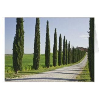 Italy, Tuscany. Cypress trees line driveway to Card