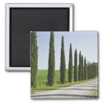 Italy, Tuscany. Cypress trees line driveway to Magnets