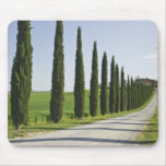 Italy, Tuscany. Cypress trees line driveway to Mouse Pad