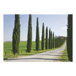 Italy, Tuscany. Cypress trees line driveway to Photographic Print