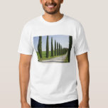 Italy, Tuscany. Cypress trees line driveway to Tees