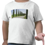 Italy, Tuscany. Cypress trees line driveway to Shirts