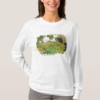 Italy, Tuscany Farmhouse viewed through T-Shirt