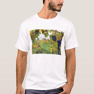 Italy, Tuscany Farmhouse viewed through T-Shirt