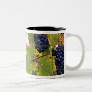 Italy, Tuscany Farmhouse viewed through Two-Tone Coffee Mug