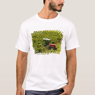 Italy, Tuscany, Greve. Pickers at work during T-Shirt