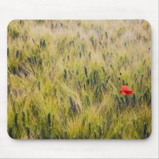 Italy, Tuscany, Lone poppy in Spring Wheat Mouse Mat