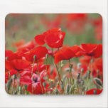 Italy, Tuscany, Mass of Summer Poppies in Mouse Mat