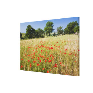 Italy, Tuscany, Meadow with Summer Poppies and Canvas Print