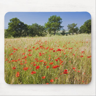 Italy, Tuscany, Meadow with Summer Poppies and Mouse Mat