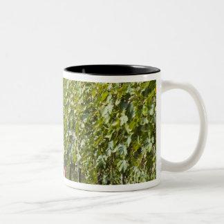 Italy, Tuscany, Montalcino. Bins of harvested Two-Tone Mug