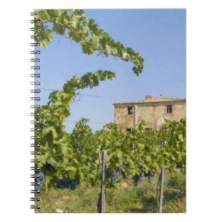 Italy, Tuscany, Montepulciano. Wine grapes ready Notebook