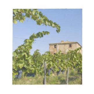 Italy, Tuscany, Montepulciano. Wine grapes ready Notepad