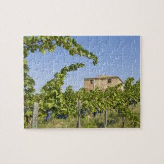 Italy, Tuscany, Montepulciano. Wine grapes ready Puzzle