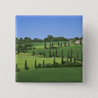 Italy, Tuscany, Multepulciano. Cypress trees 15 Cm Square Badge