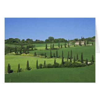 Italy, Tuscany, Multepulciano. Cypress trees Cards
